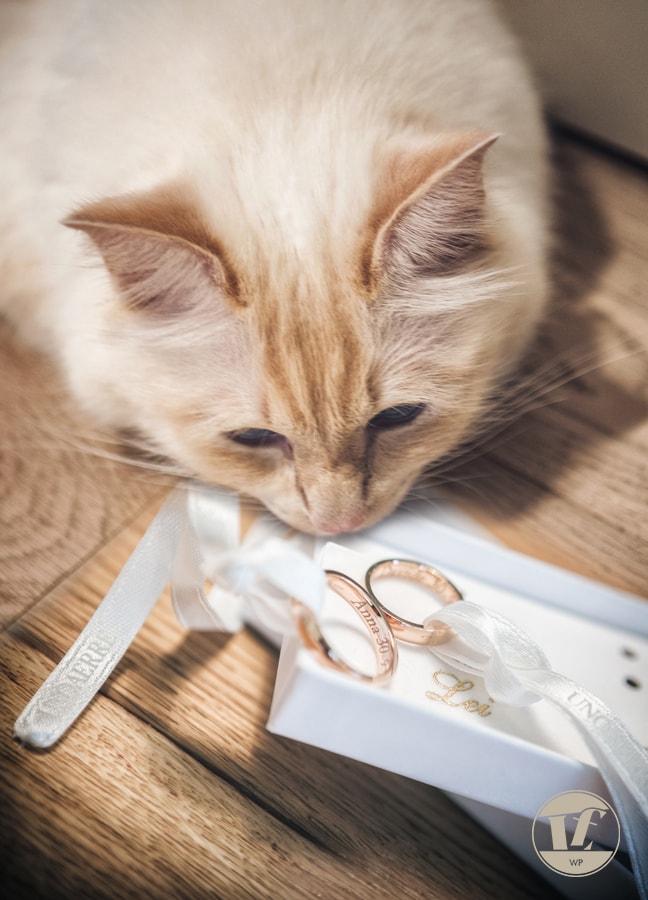 preparativi sposi matrimonio Schio